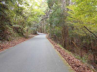 観音温泉へ3Kmの細い道
