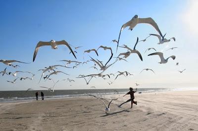 صور خلفيات طيور جميلة جدا جدا
