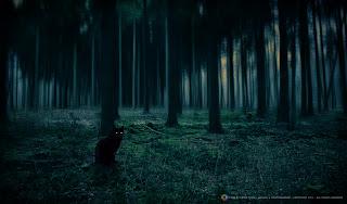 Foto kucing hutan