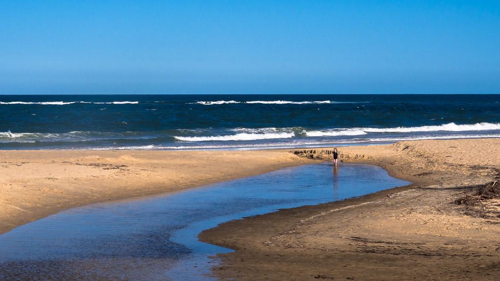 sunshine coast daily - 1020×574