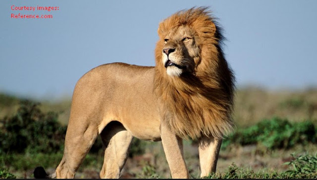 25 Hewan Paling Berbahaya di Dunia