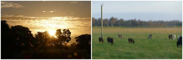 Baumsilhouetten, Australien, tipp, Vergleich, empfehlung, fotografieren, Kühe, Weide, silhouetten