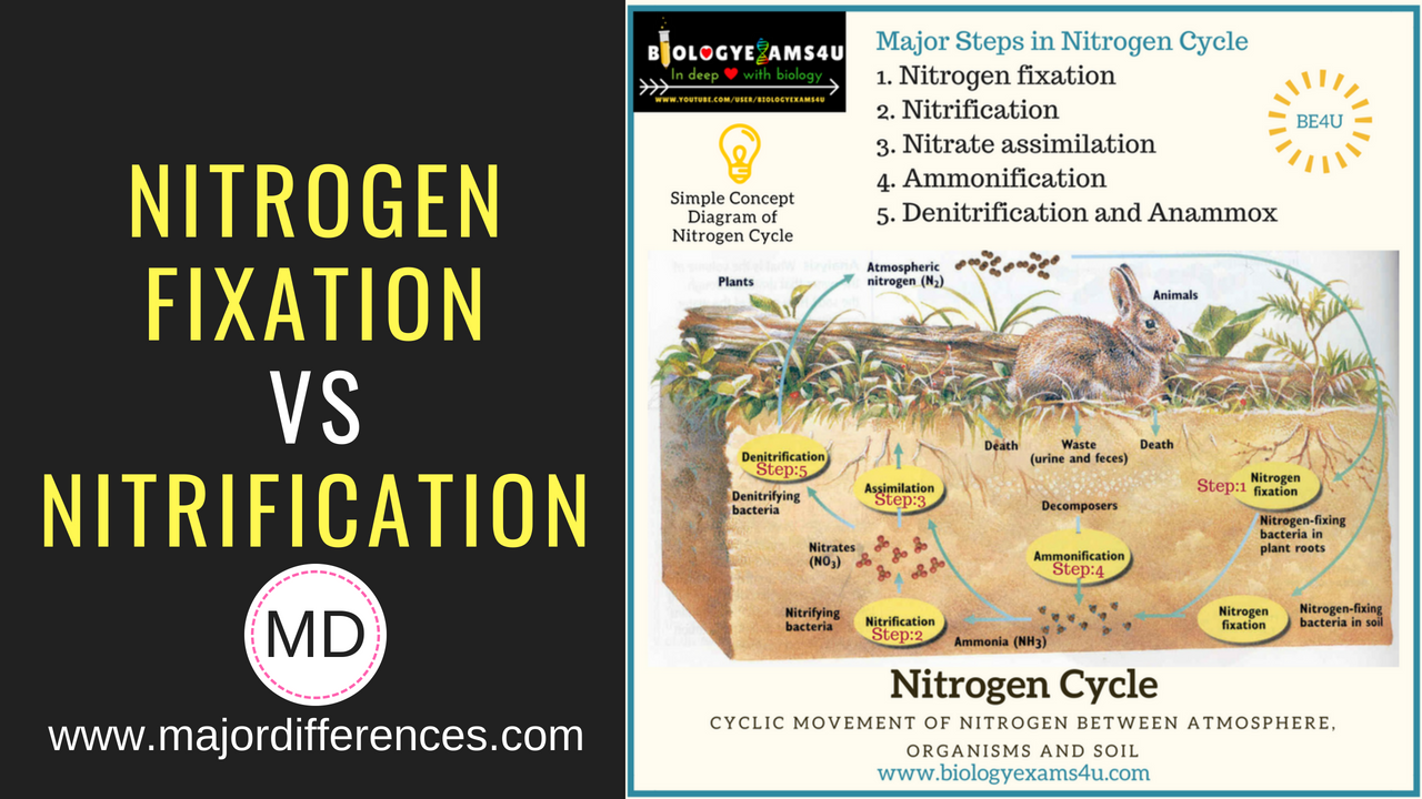 5 Differences between Nitrogen fixation and Nitrification