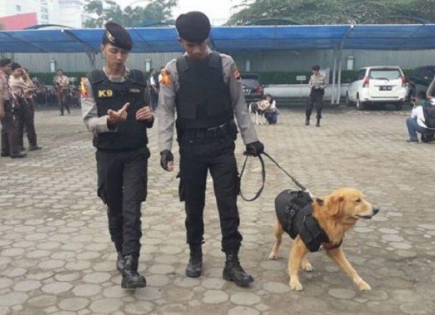Anjing Ini Tak Mau Beranjak Sebelum Jasad Korban Tsunami Diangkat