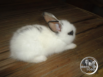 FOTO : Anak kelinci lucu