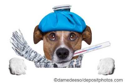 What is Canine / Feline Flu?
