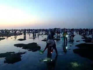 bau nyale wisata budaya lombok