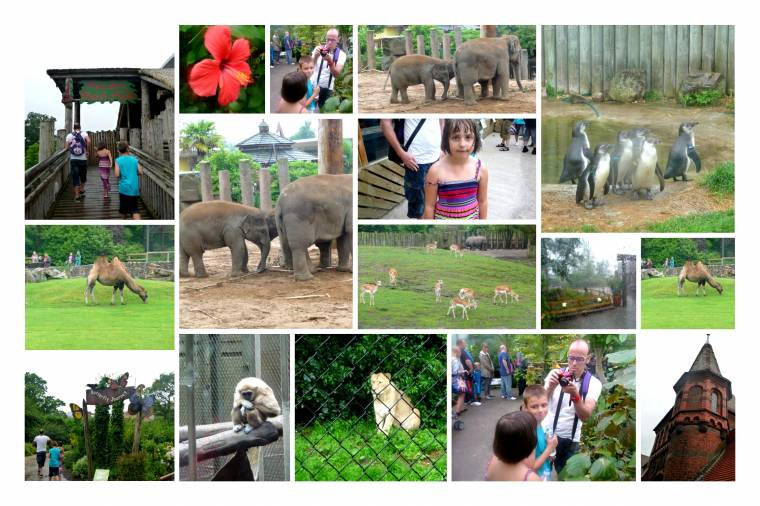 Fun With Added Rain At Chester Zoo….