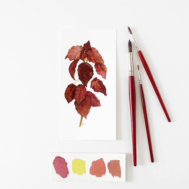 watercolor, coleus, botanical watercolor, coleus painting, coleus watercolor, Etsy, Anne Butera, My Giant Strawberry