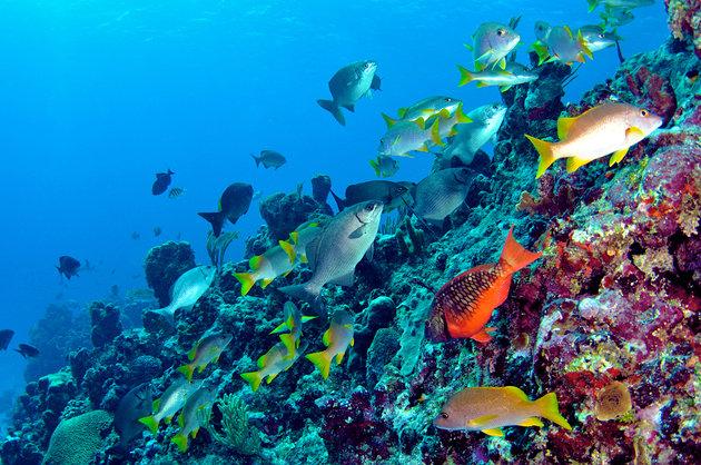 Wreck Diving ,Bermuda