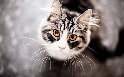 Cute Cats Kitty Pets 03