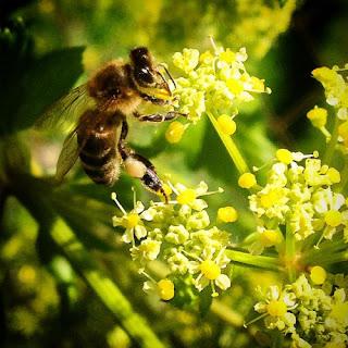 """Demostrando que los de la prensa son casi siempre son los """"últimos en enterarse"""" el periódico lleva un titular que habla de la """"misteriosa muerte de las abejas"""" y yo, viendo las miles de abejas muertas en el suelo me pregunto: ¿Donde estará el misterio?"""