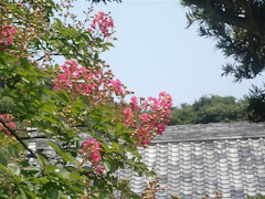 圓久寺のサルスベリ