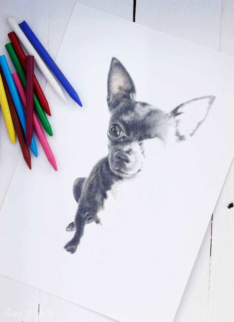Dibujo de mascotas en blanco y negro y color