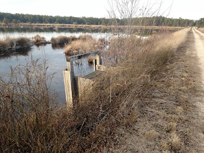 Flood gates at restored cranberry bogs, Pine Barrens, New Jersey