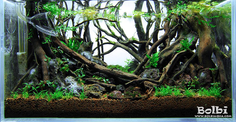 nano aquascape dance of the fireflies bolbi aquarium