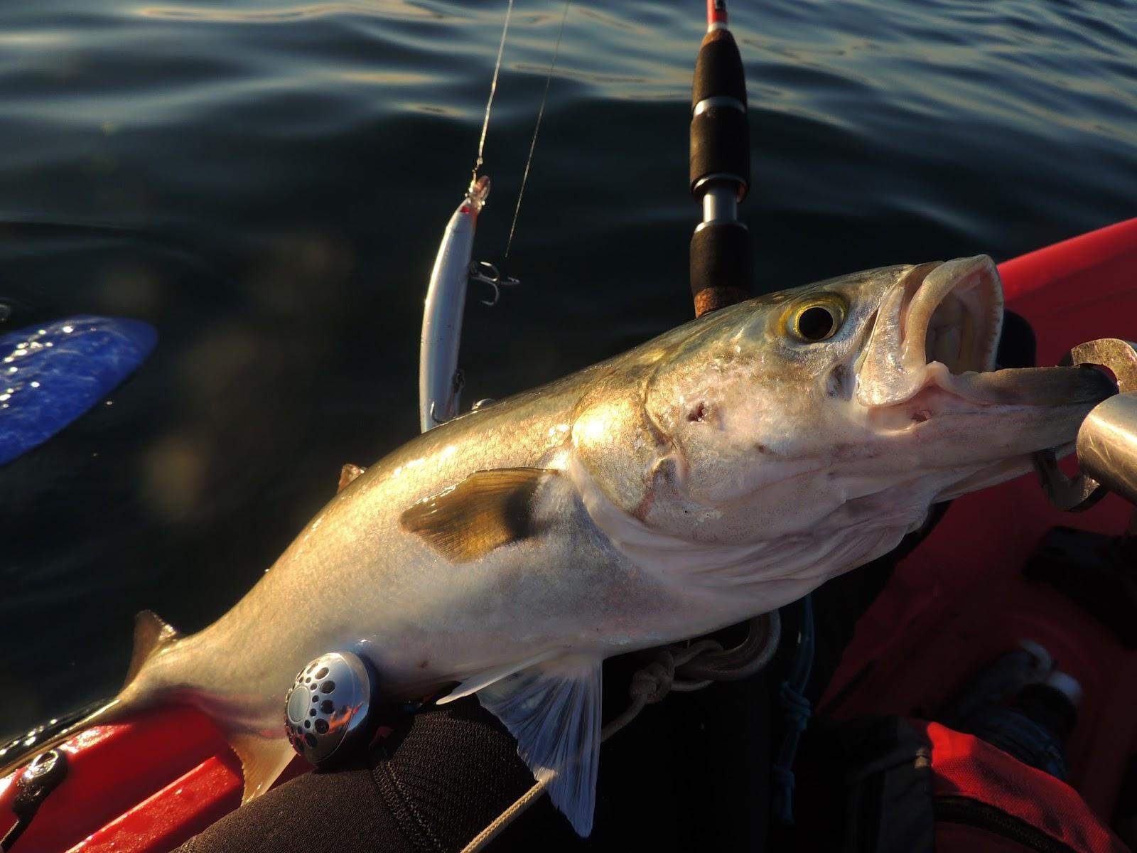Joan Torre . Fishing Blog: LA PESCA CON SEÑUELOS ARTIFICIALES. II