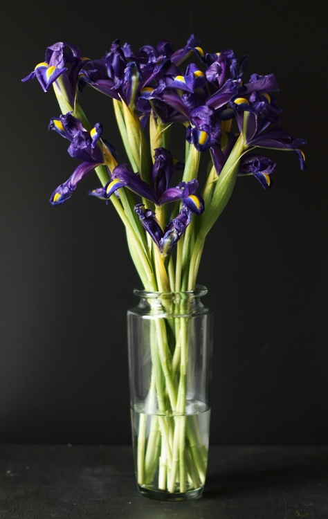 Blog & Fotografie by it's me! - lilafarbene Iris