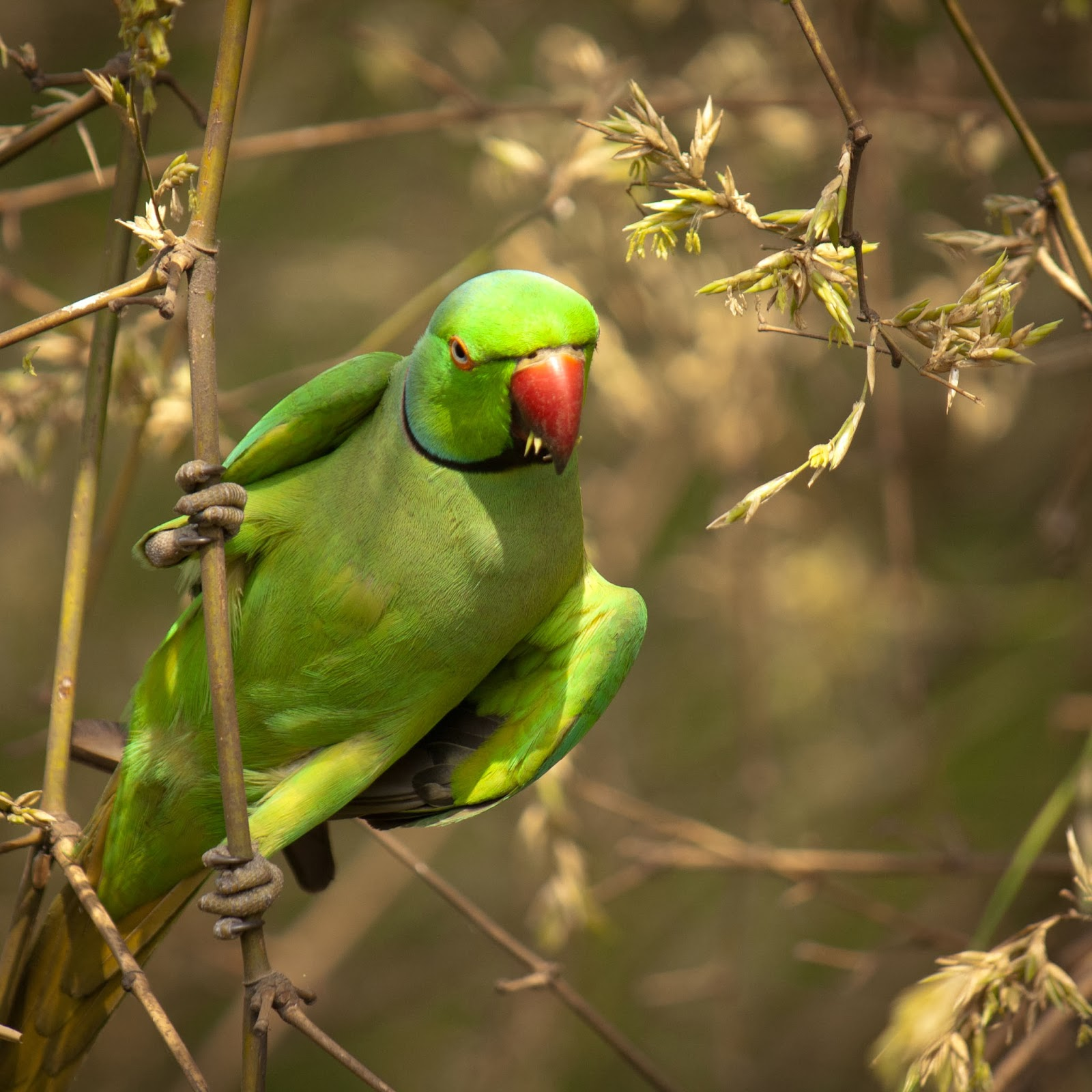 Letest Colorful Parrot HD Desktop Wallpaper Background