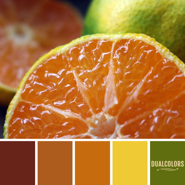 color_paleta_99