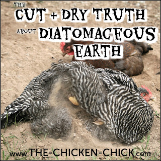 The Cut and dry truth about food grade diatomaceous earth with chickens.