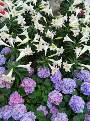 Centennial Park Conservatory 2018 Easter Flower Show blue Florist Hydrangeas and Easter Lilies by garden muses-not another Toronto gardening blog