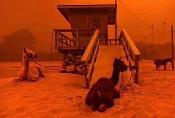 FOTOS: california esta viviendo su propio apocalipsis.