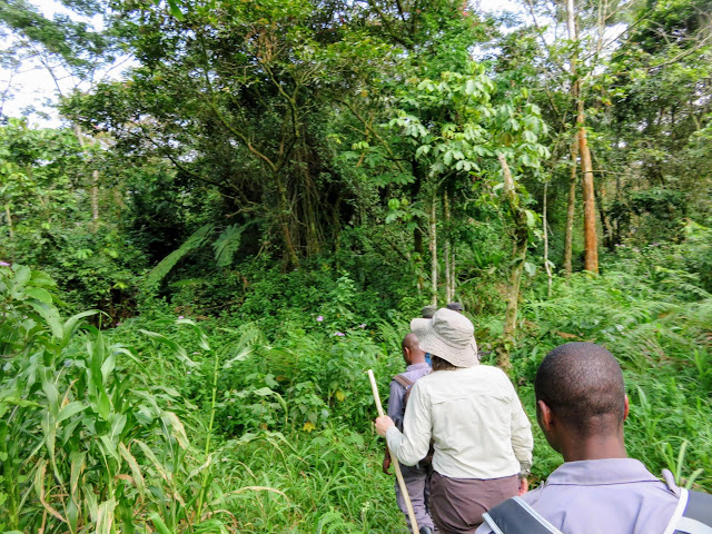 Approaching the Bwindi Impenetrable Forest on our gorilla trek in Uganda