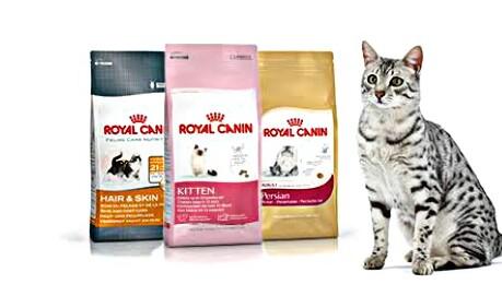 8 Makanan Kucing Anggora Yang Bagus No 6 Buatan Sendiri Hobinatang