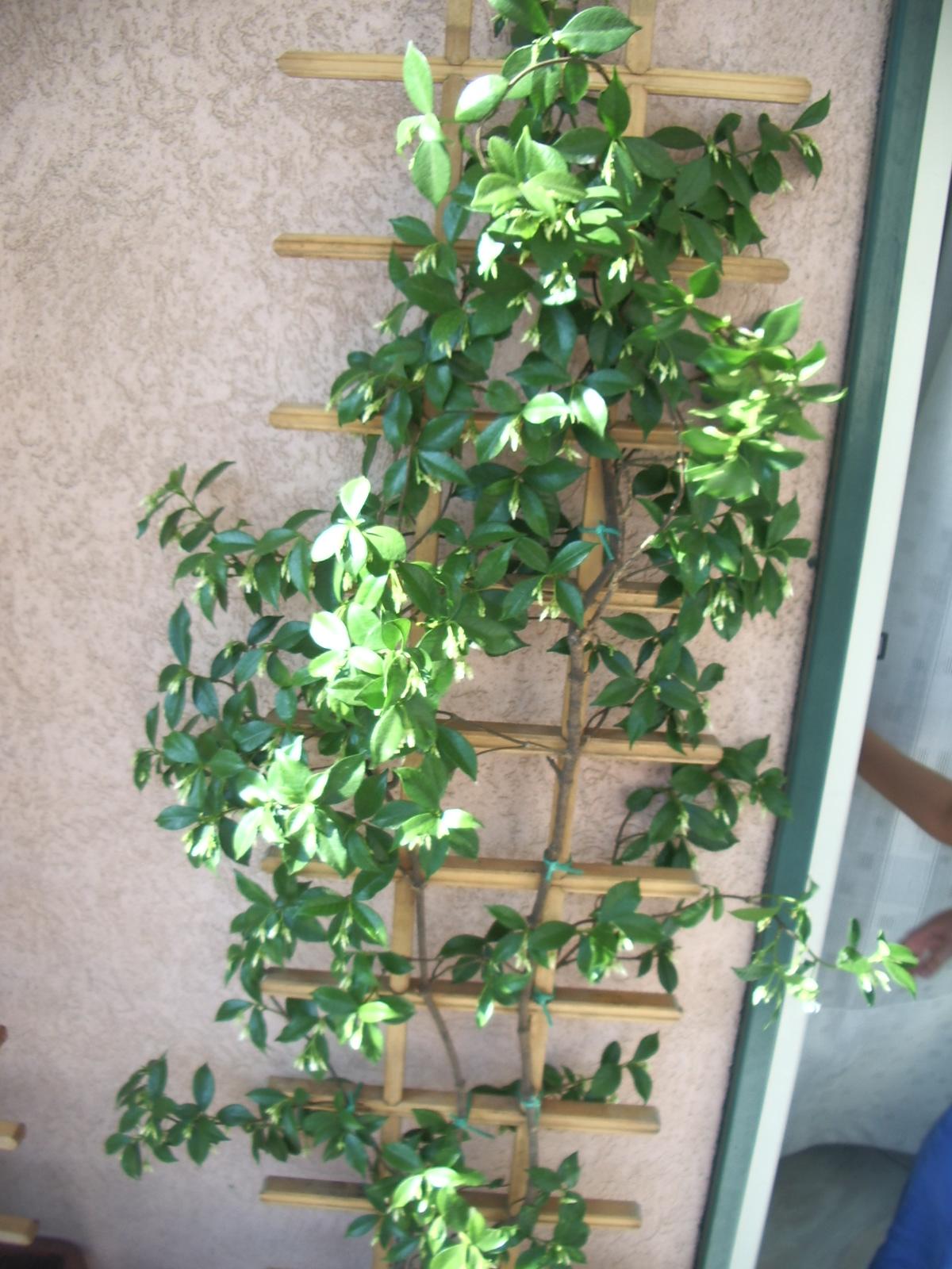 Follie di donna il giardino in terrazza for Giardino in terrazza