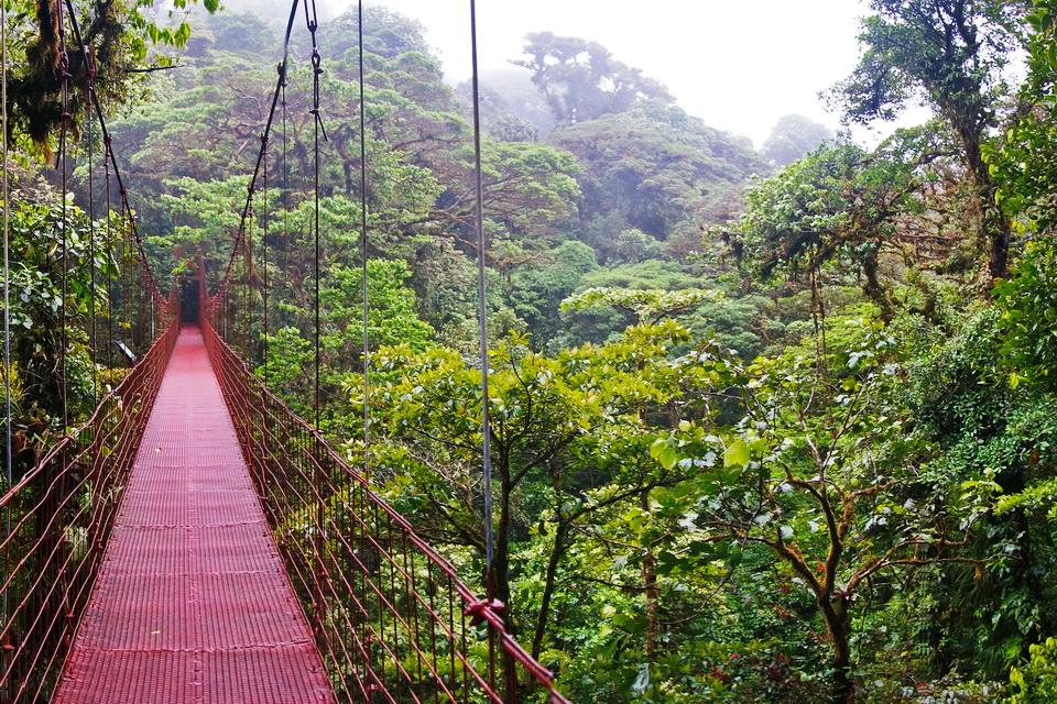 Suspended Bridge at Monteverde, Costa Rica