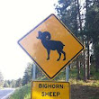Sheep Crossing????