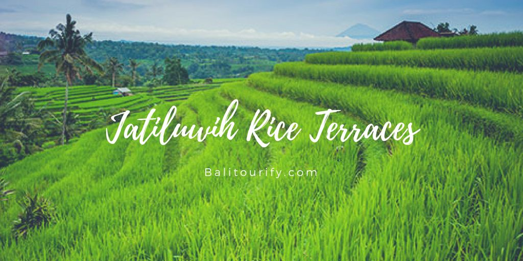 Bali One Day Tours Packages, Jatiluwih Bedugul Tour, Bali Driver and Car Hire, Whole Day Bali Tours and Activities, Bali Full Day Trips Itinerary