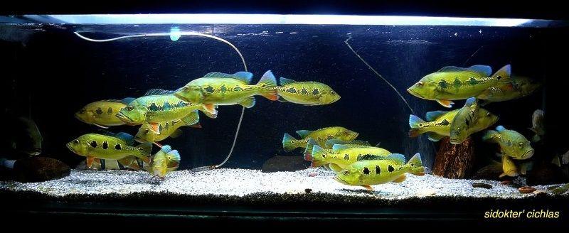 Gambar Filter Aquarium Air Tawar, Inilah Kisaran Harganya