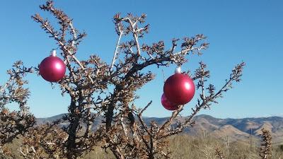 A christmas bitterbrush near Reno