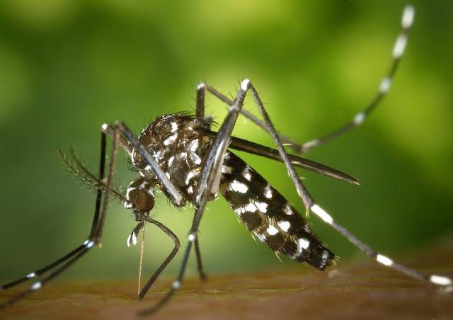 20 Pencegahan dan Pengobatan Demam Dengue