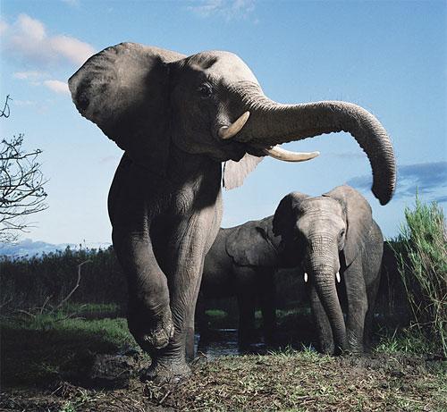 10 Most Amazing Facts >> Beautiful Animals Safaris: Safari Amazing ! Beautiful Animal Safari pictures