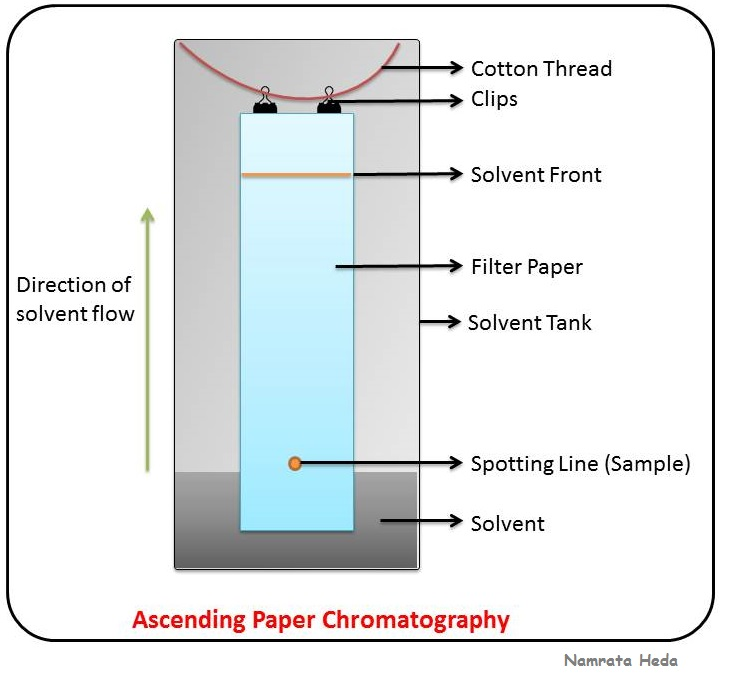 What Is Paper Chromatography And Electrophoresis