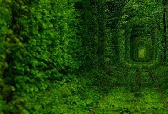http://4.bp.blogspot.com/-pIrNZzDjY9Q/ULnip_5vBQI/AAAAAAAA6bQ/VcDTcWwi9pw/s1600/Top-10-Tree-Tunnel-008.jpg