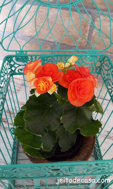 planta-gaiola-decorativa