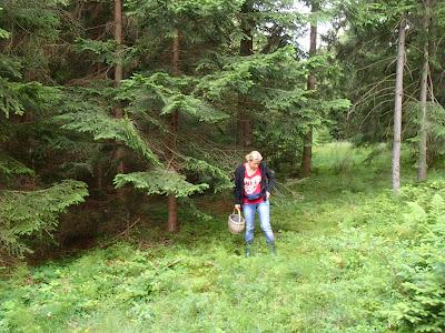 Grzyby na Orawie, grzyby w lipcu, grzybobranie w lipcu, borowik szlachetny Boletus edulis, Boletus reticulatus borowik usiatkowany, koźlarz świerkowy Leccinum piceinum, goryczak żółciowy Tylopilus felleus