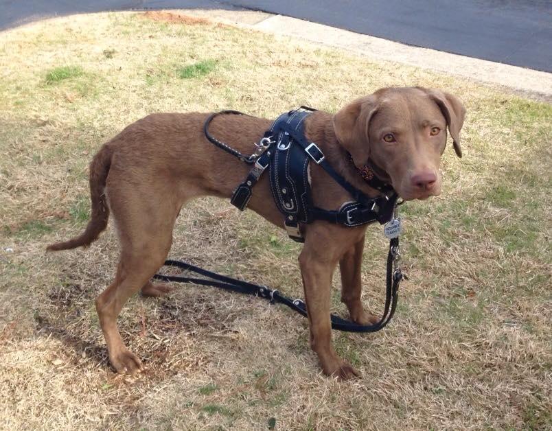 service dog counterbalance harness