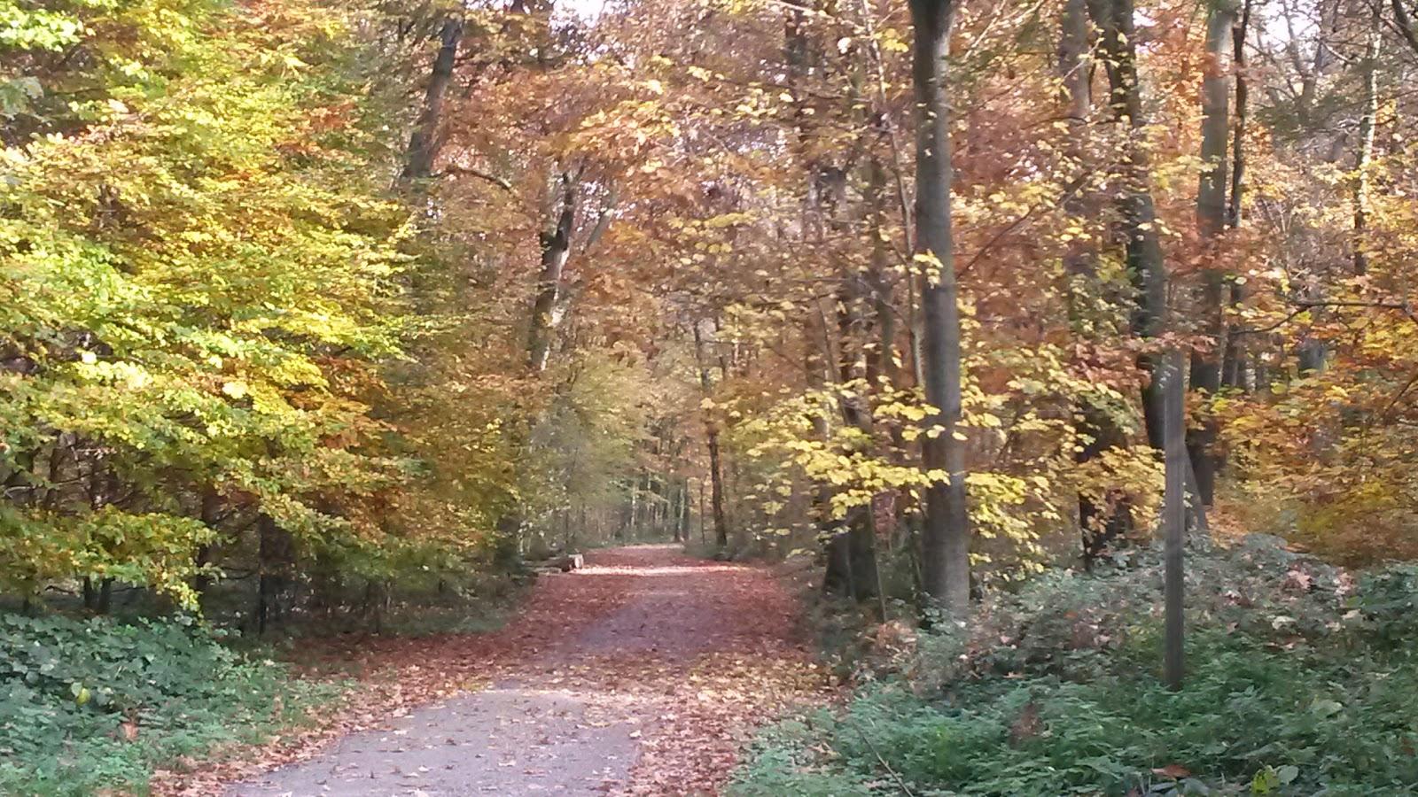 november blues Nebelig, kalt, nass - im november hat nicht nur unser immunsystem zu kämpfen  auch unserer stimmung kann das zu schaffen machen.