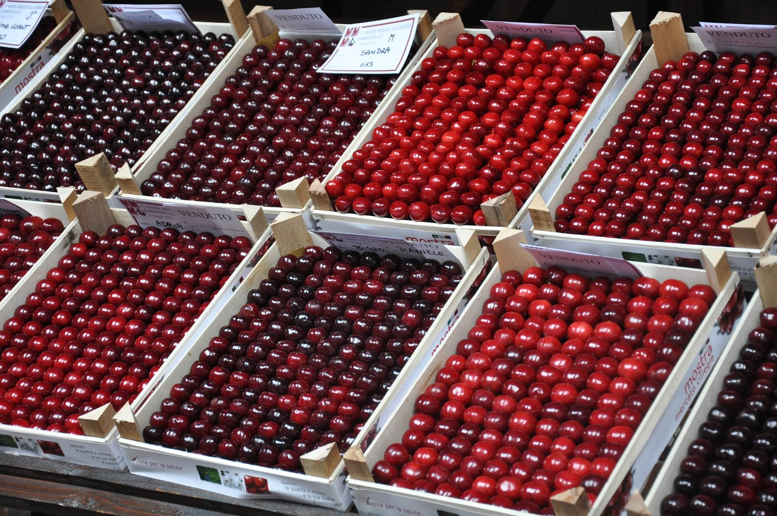 Crates of Premier Cherries, Cherry Show Market, Marostica, Veneto, Italy