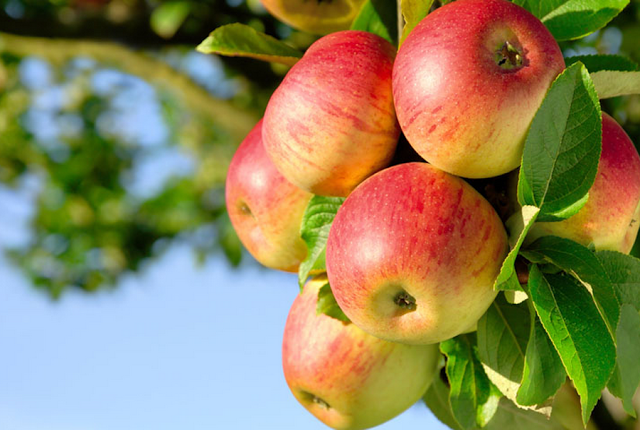 iata ce se intampla in organism dupa ce consumi mere