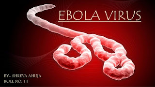 Ebola Virus: Identification And Prevention