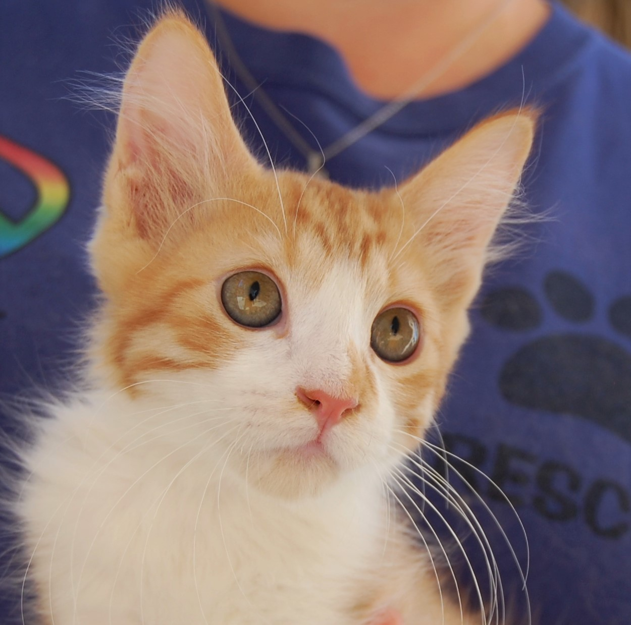 Nevada SPCA Animal Rescue 30 rescued kittens ready for adoption