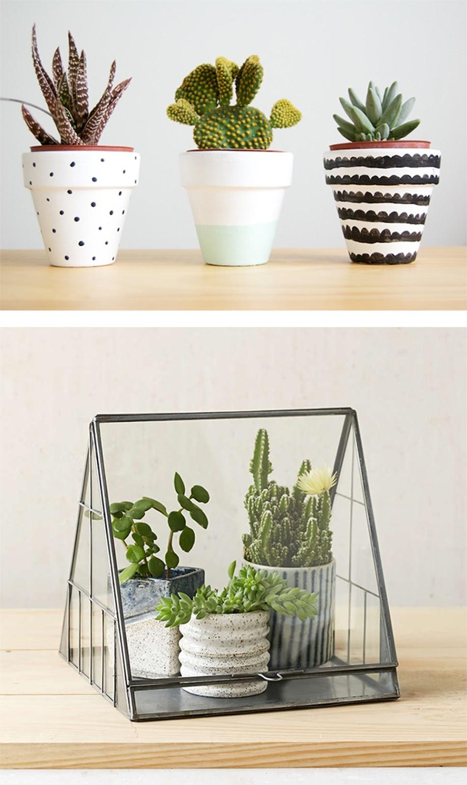 decorare con le piante grasse e succulente