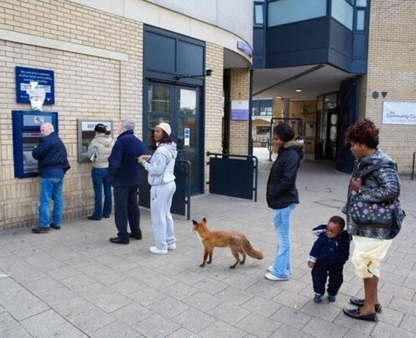 Queue with a dog