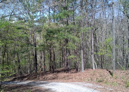 The Villas at Coosawattee: New Lots for Sale in Eagle's